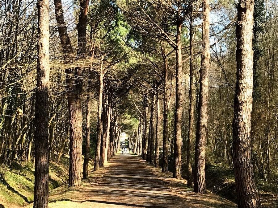 Ataturk Arboretumu