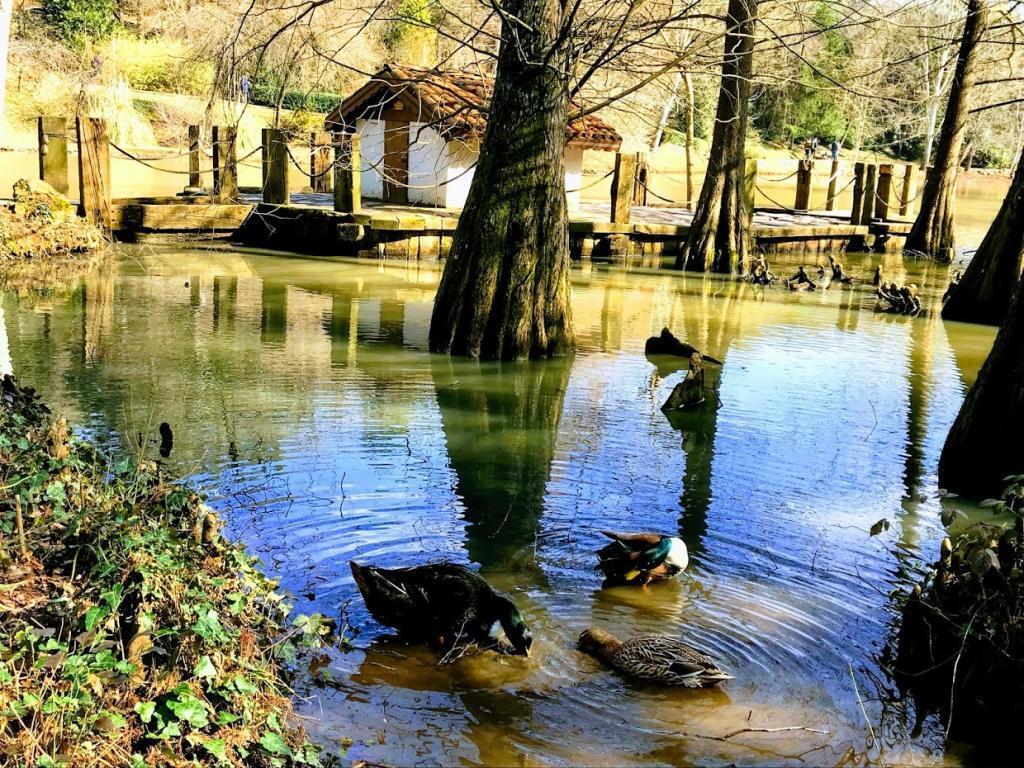 Bahçeköy Ataturk Arboretumu